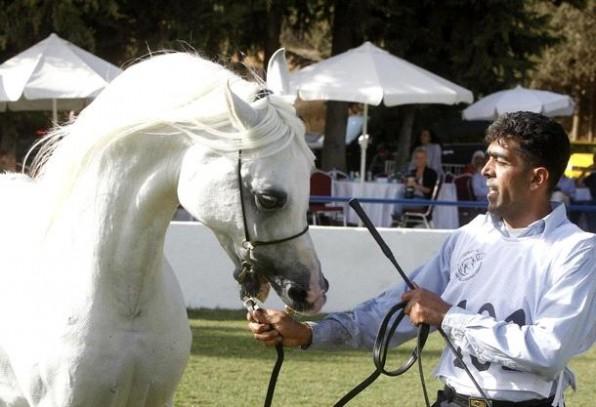 بطولة الشرق الأوسط لجمال الخيول العربية تنطلق غداً