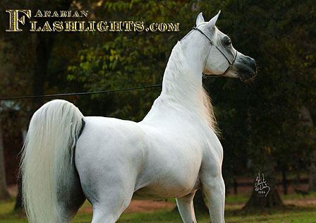 AlAadeed10_1888-BYATT-1004-81