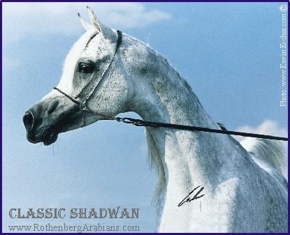 Classic Shadwan