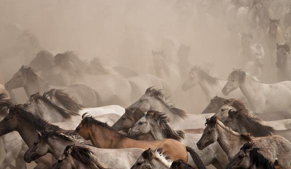 """نفوق 30% من الخيول بمحطة الزهراء التابعة لـ""""الزراعة المصرية"""""""