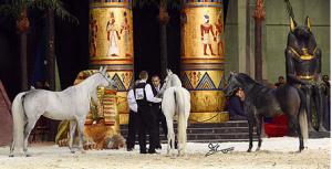 بالصور نتائج بطولة أوربا للخيل العربية الأصيلة ٢٠١١