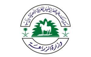 228 جواداً من 99 مالك يتنافسون الخميس المقبل ببطولة مكة الدولية لجمال الخيل العربية الأصيلة