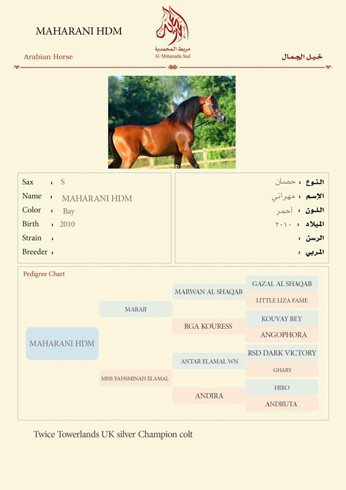 MAHARANI HDM