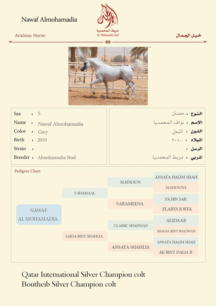 Nawaf Almohamadia