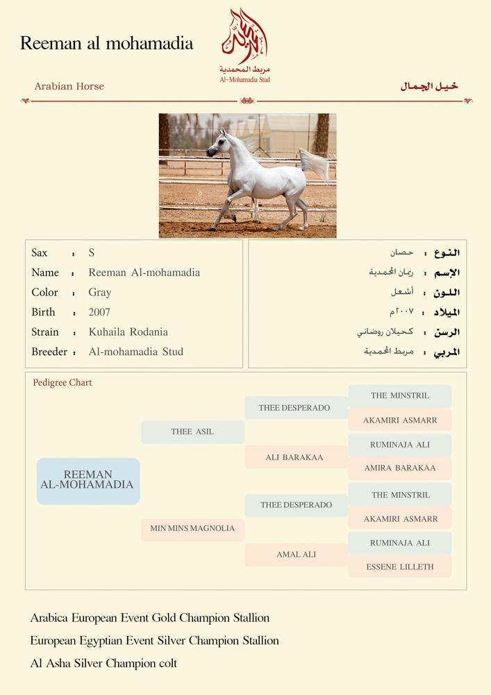 Reeman  Al-mohamadia