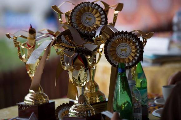 بطولة العالم للخيل المصرية