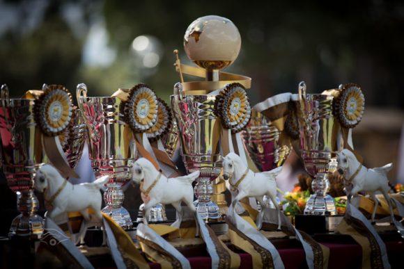 بطولة العالم للخيل المصرية روما