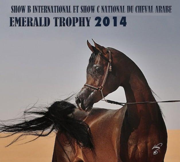 نتائج وصور بطولة كأس ايمرالد الدولية ٢٠١٤ لجمال الخيل العربية الأصيلة ببلجيكا – وتفوقللـ (الخالدية) و (السـيد)