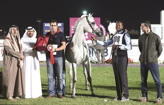 بطولة قطر الوطنية لجمال الخيل العربية تختتم اليوم بنادي الفروسية