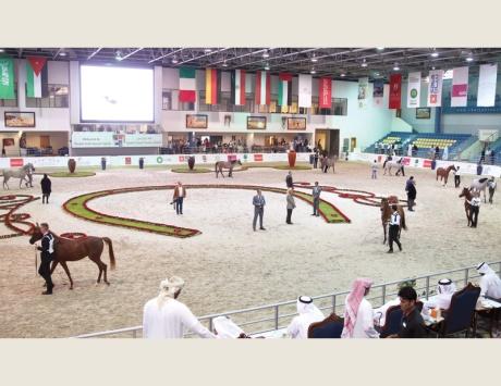 الأربعاء آخر يوم للتسجيل في مزاد الشارقة للخيول العربية