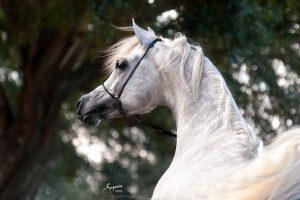 دراسة: الخيول يمكنها التمييز بين الوجوه الغاضبة والسعيدة