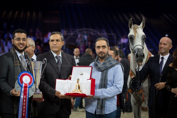 MOZN AL BIDAYER مزن البداير (S.M.A. MAGIC ONE x MATTAHARII) – Al Bidayer Stud – UEA