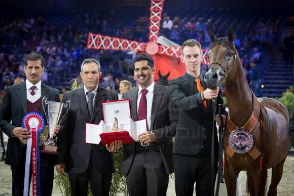 ALEXXANDERR الكساندر (EXCALIBUR EA x  AR MOST IRRESISTIBLE) – Al Sayed Stud – KSA