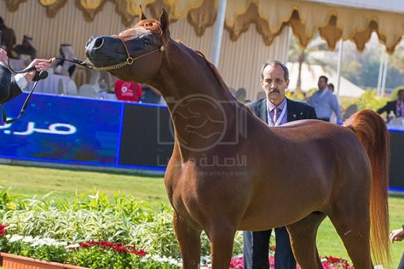 بطولة مركز الملك عبدالعزيز ١٠