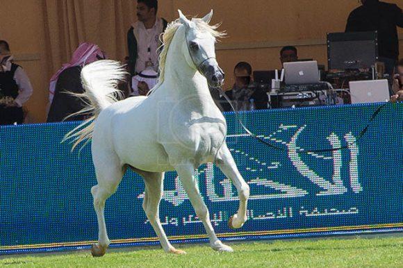 بطولة مركز الملك عبدالعزيز ٢٤