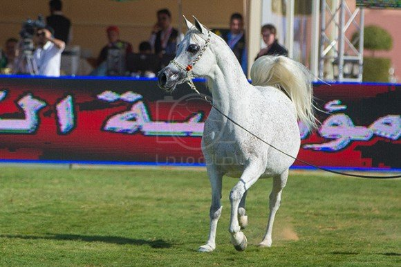 بطولة مركز الملك عبدالعزيز ٢