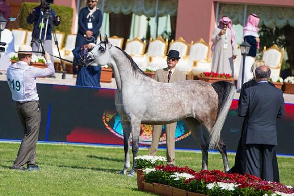 بطولة مركز الملك عبدالعزيز ٣٨