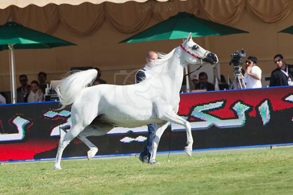 بطولة مركز الملك عبدالعزيز ٣٩