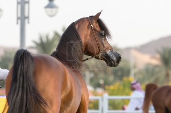 بطولة مركز الملك عبدالعزيز 001A8681