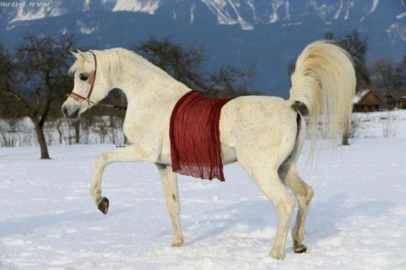 5 أخطاء شائعة يقوم بها أصحاب الخيول في الشتاء