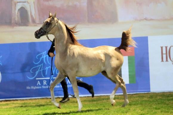 MHF_1258 ابوظبي ٢٠١٦