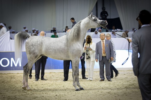 اي اس حرير E.S. HARIR   (AJ DINAR x TF MAGNUM'S MAGIC) مربط الصقران