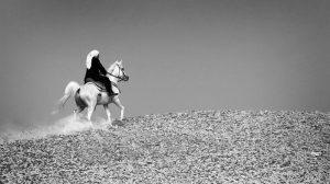 مصر: غضب أعضاء لجنة الزراعة بـ«النواب» يهدد الوزير بسبب التلاعب بأنساب الخيول العربية!