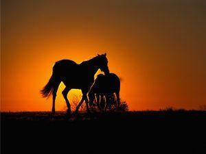 لماذا نلجأ لقتل الخيول عند كسر أحد قوائمها؟