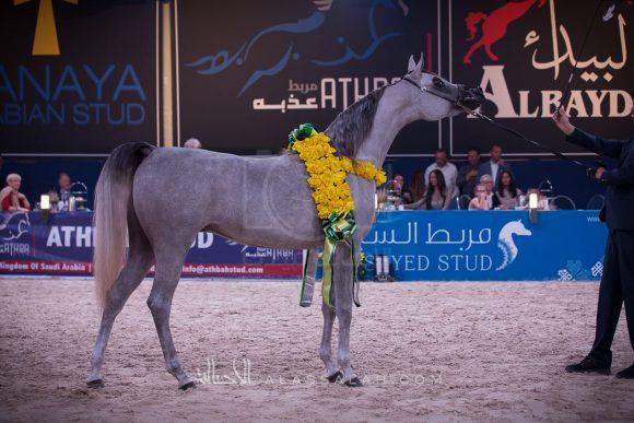 ملكة الملوك (ما ملوك x اصالة الهلا) مبارك حمدان الخشاب – الكويت