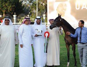 """مشاركة قياسية """"618 جواداً"""" في بطولة الإمارات الوطنية لجمال الخيول العربية"""
