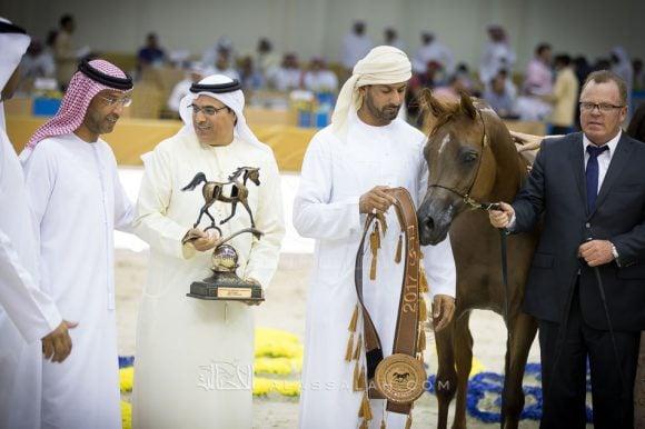 أيلي فلامينكا (عجمان مونسشن x الامارا أم أيه) – مربط دبي – الإمارات
