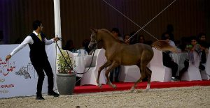 اختتام بطولة الشيخ فيصل بن حمد آل خليفة الرابعة لجمال الخيل العربية الأصيلة – النتائج النهائية