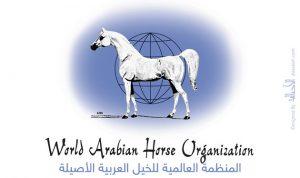 (الواهو) .. حقائق وتعريف .. المنظمة العالمية للخيل العربية الأصيلة