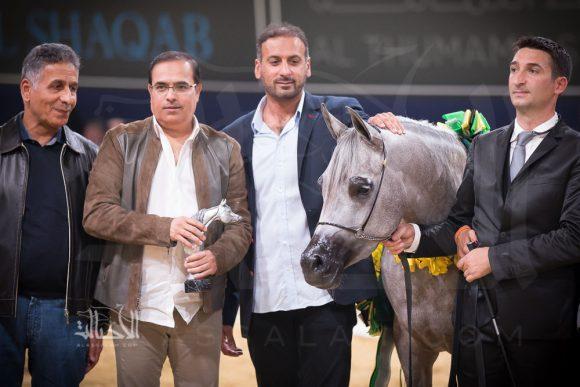 دي عجايب (آر اف آي فريد x ليدي فيرونيكا) مربط دبي – الإمارات
