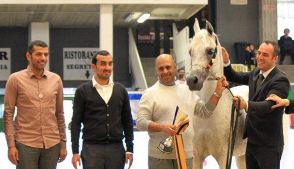 «الريان» يحقق خمس القاب في ختام بطولة العالم لجمال الخيل العربية السلالة المصرية