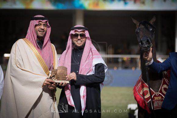 ماهر السيد (ألكساندر x ميرا السيد) مربط السيد – السعودية
