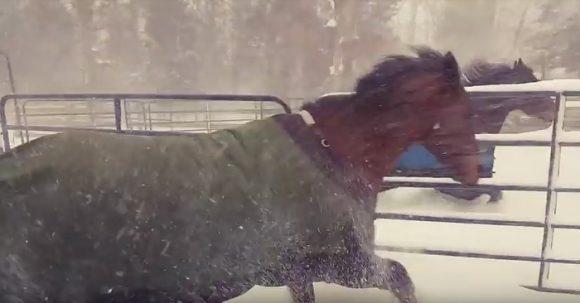 فيديو: ردة فعل غريبة لخيول بعد خروجها في الثلج