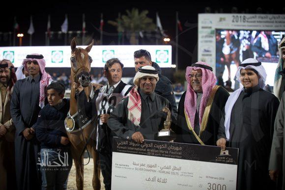 الفضة: تيمون الشقب (مروان الشقب x فرح الشقب) مربط الشقب – قطر