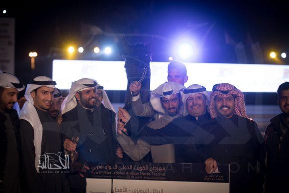 البرونز: ساري العونه (الفونسو x خ واف دبليو انيسا) عبد اللطيف الرشيدي – الكويت