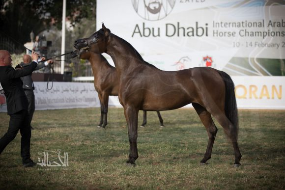 إيرالدا (إميرالد جيه x إنيزجا) إسطبلات الشراع – الإمارات