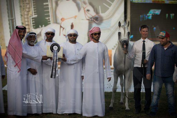 عدوان الزبير (ماجيك ون x ماهريسا) مربط مزاب – الإمارات