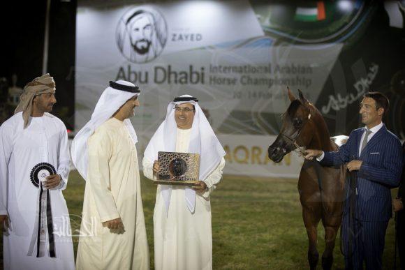 دي محبوب (دي مشاري x جوليانا زد) مربط دبي – الإمارات