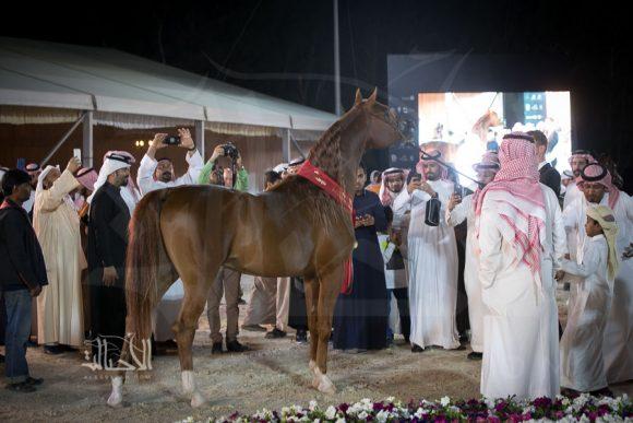 البرونز: سنجار غرناطة (شمال الخالدية x اس جي مروة) ناصر بن كليفيخ الهاجري – السعودية
