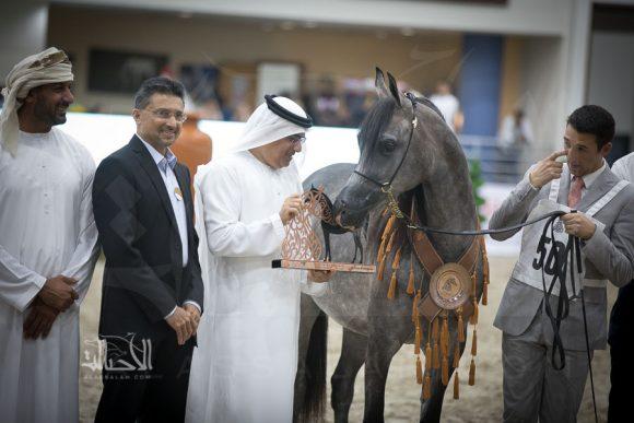 دي مميزة (اف ايه الرشيم x ام راندي) مربط دبي – الإمارات
