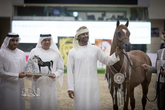 دي شلال (اف ايه الرشيم x دي شهلاء) مربط دبي – الإمارات