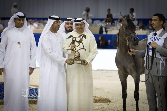 دي شيهانة (اف ايه الرشيم x دي هلاء) مربط دبي – الامارات