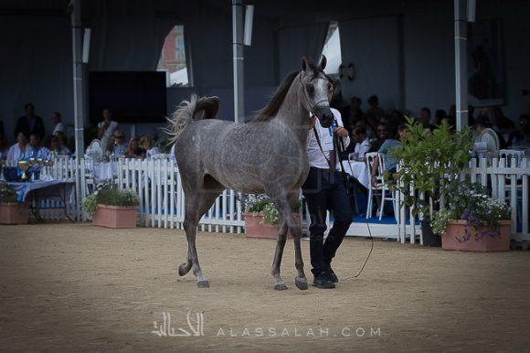 دي رنانة (دي خطاف x جميلة) مربط دبي – الإمارات.