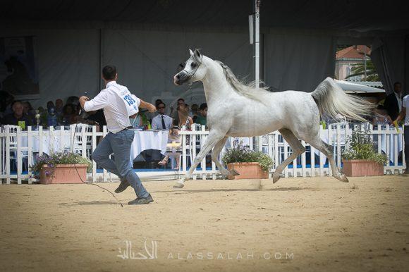 إي اس حرير (ع ج دينار x تي في ماجنومس ماجيك ) مربط الصقران – الإمارات/ الكويت