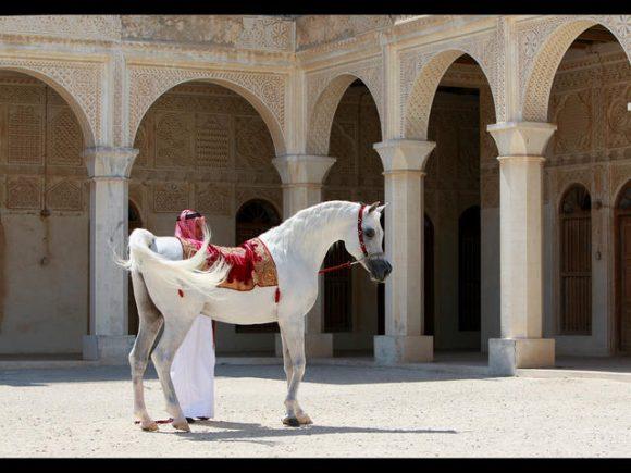 العديد الشقب al adeed al shaqabAl-Adeed-3