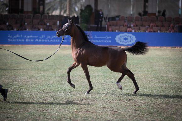 الأمير سلطان الخالديةISSS2532